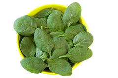 Young spinach in a yellow  plate, isolated on a wh Royalty Free Stock Images