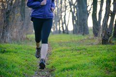Young Sports Woman Running on the Forest Trail in the Morning Royalty Free Stock Image