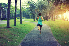 Young sporty asian woman running at tropical park. Healthy lifestyle young sporty asian woman running at tropical park Stock Image