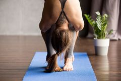Young sporty woman doing head to knees exercise, close up. Young sporty woman practicing yoga, doing head to knees exercise, uttanasana, Standing forward bend stock images