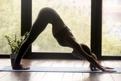 Young sporty woman doing Downward facing dog exercise. Young sporty woman practicing yoga, doing Downward facing dog exercise, adho mukha svanasana pose, working stock photography