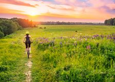 Young sporty woman riding a bicycle at sunset. Sporty girl goin downhill on bike among the field of lupines . Lens flare. Against the sky background royalty free stock photos