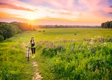 Young sporty woman riding a bicycle at sunset. Sporty girl goin uphill on bike among the field of lupines . Lens flare. Against the sky background stock image