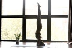 Young sporty woman in salamba sirsasana yoga asana royalty free stock image