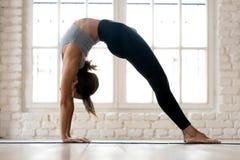 Young sporty yogi woman practicing yoga, doing Bridge exercise stock images