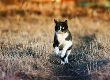 Young spotted beautiful cat flees quickly on Sunny spring meadow stock images