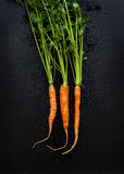 Young spring carrots with tops on black chalkboard from above Royalty Free Stock Photos