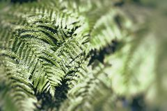 Young spring fern leaves on green background in wet forest Stock Photos