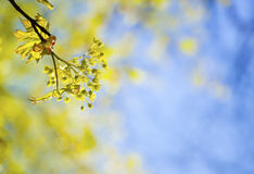 Young spring  leaves against the sky Stock Images