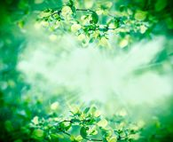 Young spring leaves in forest. Lit by sunbeams - sun rays Royalty Free Stock Image