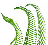 Young spring palm leaves Stock Images