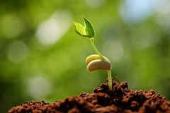Young sprout royalty free stock photo