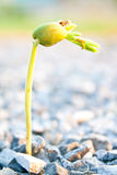 Young sprout Royalty Free Stock Images