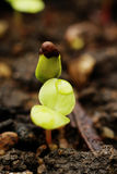 Young sprout Stock Photography