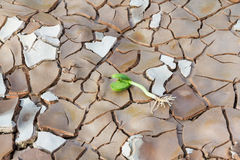 Young sprout in cracked land Stock Images