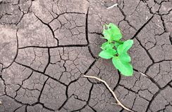 Young sprout on dry land Royalty Free Stock Photo