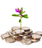 Young sprout with flower grows from a pile of British coins. Royalty Free Stock Photography