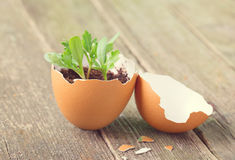 Young sprout in a half of an egg shell Stock Photos