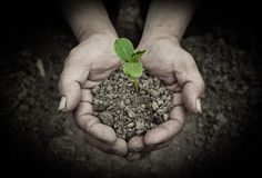 Young sprout in hands Royalty Free Stock Images