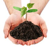 Young sprout in the hands of a man Royalty Free Stock Image