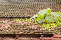 Young sprout on the old roof. Closer view Royalty Free Stock Photography