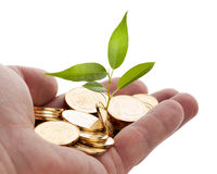 Young sprout from a pile of coins. Stock Photo