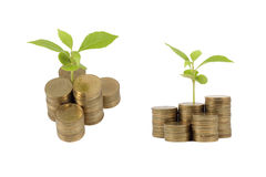Young sprout from a pile of coins. Isolated Royalty Free Stock Photos
