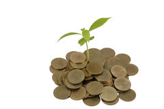 Young sprout from a pile of coins. Isolated Royalty Free Stock Image