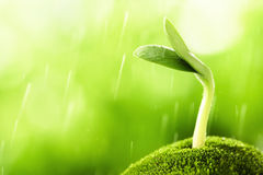 Young sprout. In the rain,Closeup Stock Photo
