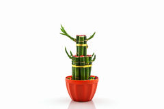 Young sprout of Ribbon dracaena tree. Royalty Free Stock Photography
