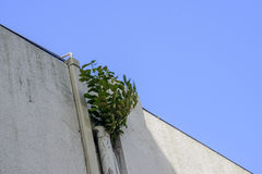 Young sprout on the roof Stock Photography