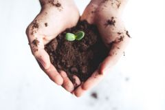 Young sprout in springtime,Closeup.Hands of farmer growing plant a tree natural background,Plant a tree growing plant The soil and. Seedlings in the old Stock Photography