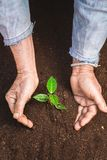 Young sprout in springtime,Closeup.Hands of farmer growing plant a tree natural background,Plant a tree growing plant The soil and. Seedlings in the old Stock Photos