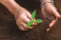 Young sprout in springtime,Closeup.Hands of farmer growing plant a tree natural background,Plant a tree growing plant The soil and. Seedlings in the old Royalty Free Stock Photos