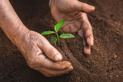Young sprout in springtime,Closeup.Hands of farmer growing plant a tree natural background,Plant a tree growing plant The soil and. Seedlings in the old hand Stock Photography