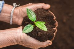 Young sprout in springtime,Closeup.Hands of farmer growing plant a tree natural background,Plant a tree growing plant The soil and. Seedlings in the old Royalty Free Stock Photography
