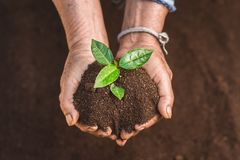 Young sprout in springtime,Closeup.Hands of farmer growing plant a tree natural background,Plant a tree growing plant The soil and. Seedlings in the old Stock Image
