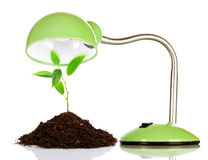 Young sprout and table lamp Royalty Free Stock Images