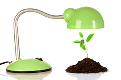 Young sprout and table lamp Stock Image