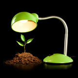 Young sprout and table lamp Stock Photos