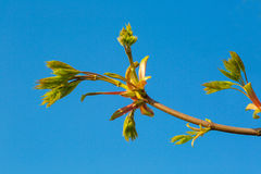 Young sprout of wood against the sky Stock Image