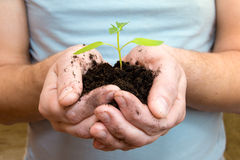 Young plant in hands Royalty Free Stock Photography