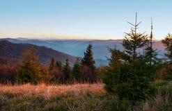 Young spruce, pines, orange deciduous trees against smoky mounta Stock Photos