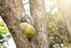 Young squirrel on the tree in the park . blur royalty free stock photography