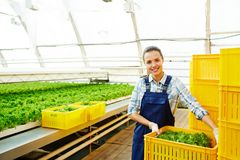 Worker of hothouse Royalty Free Stock Photography