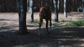 Young foal walking in the woods