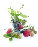 Young strawberry plant Stock Photo