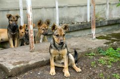 Young stray dog puppies want to eat royalty free stock photo