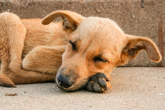 Young stray dog sleeping Stock Photo