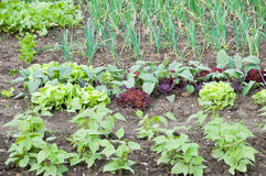 Young string bean plants and other vegetables Stock Photo